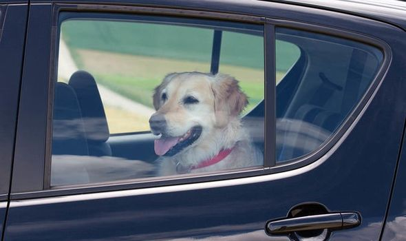 Useful Tips On How To Prepare Your Dog For A Relocation